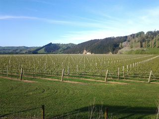 Gisborne Vineyards